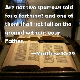 Message - Bible two sparrows Matthew 10.29
